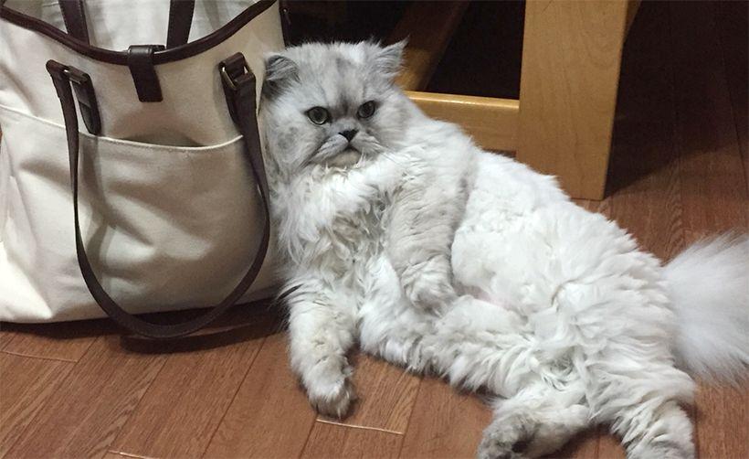 猫を飼ってみて初めて分かった意外な5つの行動
