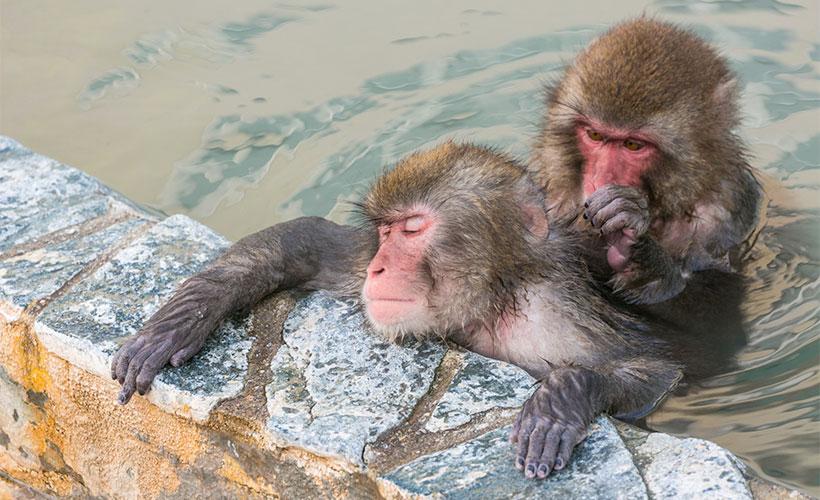 風呂に入る猿